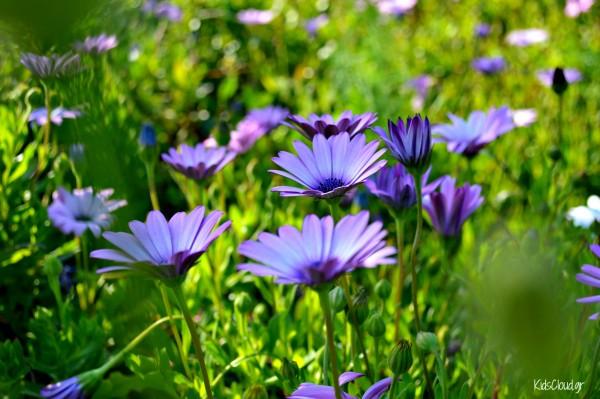 Λουλούδια KidsCloud.gr